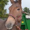 Rocky the Mule5