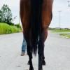 Geraghty's Girl rear