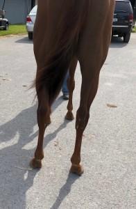 My Little pretty rear